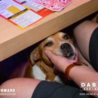 Dabbers_Bingo_Doggie_Bingo 28