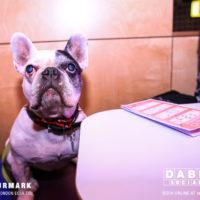Dabbers_Bingo_Doggie_Bingo 35