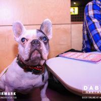 Dabbers_Bingo_Doggie_Bingo 37