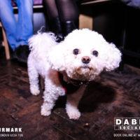 Dabbers_Bingo_Doggie_Bingo 39