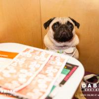 Dabbers_Bingo_Doggie_Bingo 4