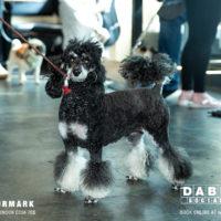 Dabbers_Bingo_Doggie_Bingo 45