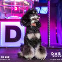 Dabbers_Bingo_Doggie_Bingo 46