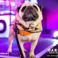 Dabbers_Bingo_Doggie_Bingo 48