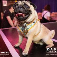 Dabbers_Bingo_Doggie_Bingo 51
