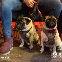 Dabbers_Bingo_Doggie_Bingo 55