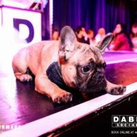 Dabbers_Bingo_Doggie_Bingo 57