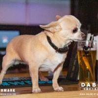 Dabbers_Bingo_Doggie_Bingo 58