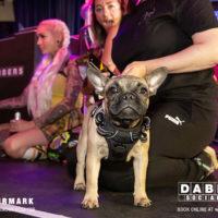 Dabbers_Bingo_Doggie_Bingo 60