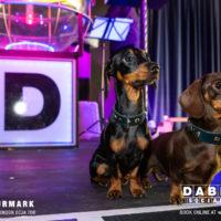Dabbers_Bingo_Doggie_Bingo 64