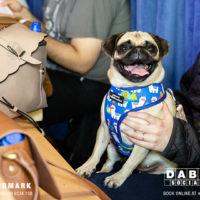 Dabbers_Bingo_Doggie_Bingo 66