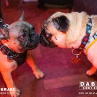 Dabbers_Bingo_Doggie_Bingo 7
