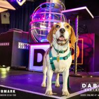 Dabbers_Bingo_Doggie_Bingo 70